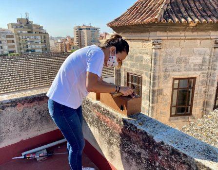 Proyecto ecológico de los Agustinos de Palma
